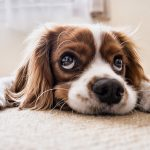 Tips for Cleaning Up After Your Pet in an Apartment